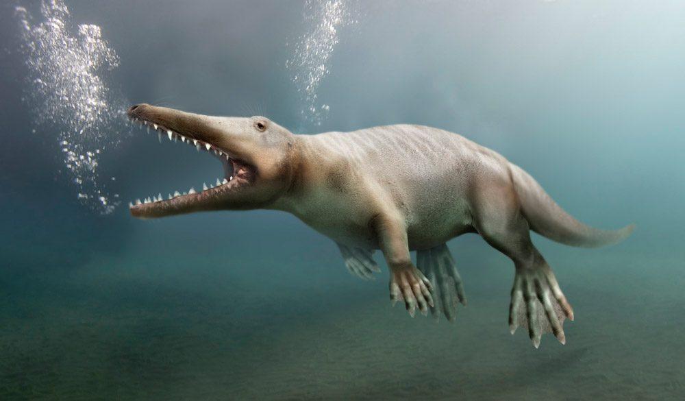 Resultado de imagen para Las ballenas de hace millones de años