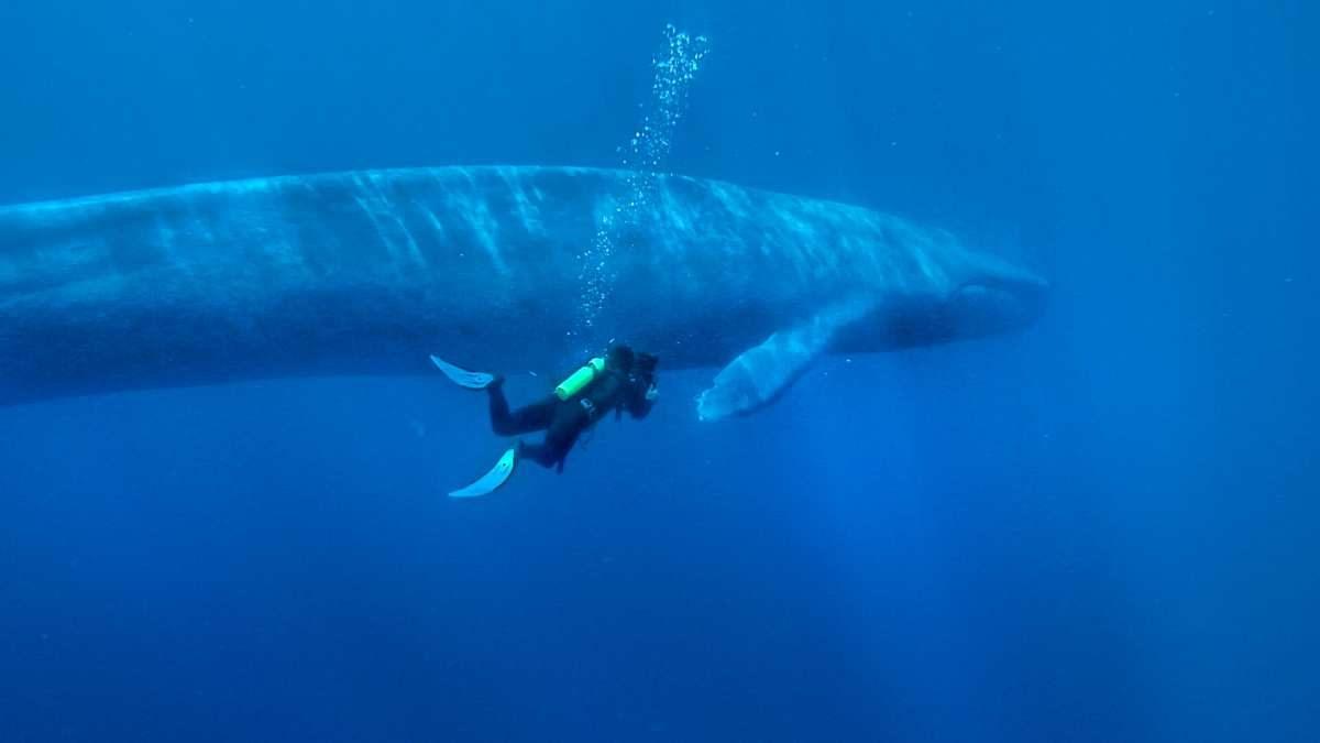 ballena azul - photo #1