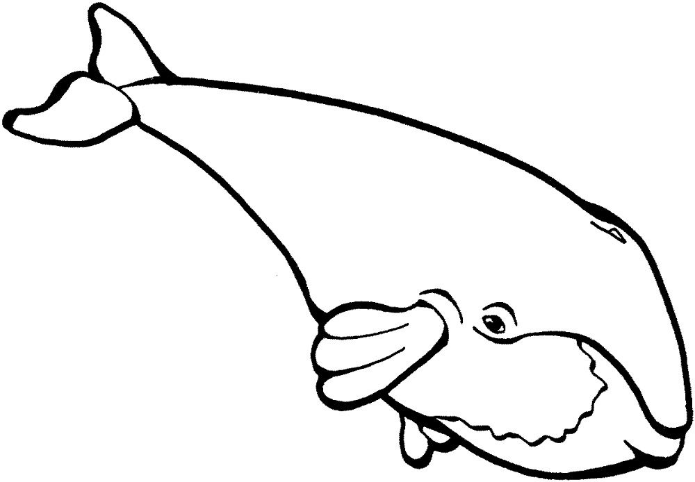 Beluga whale coloring pages