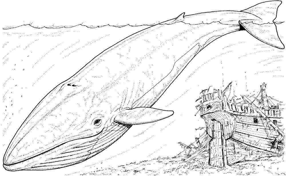 Worksheet. Dibujos de ballenas