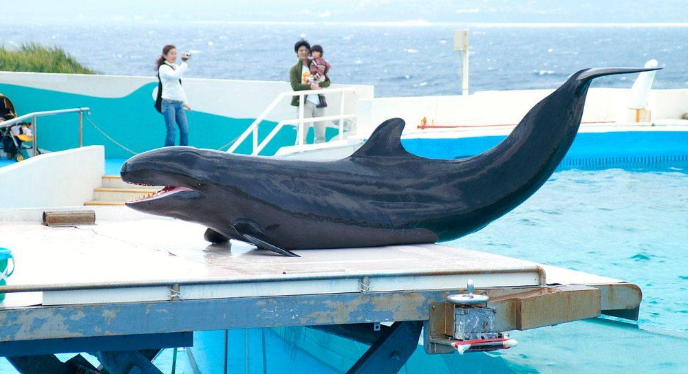 Falsas orcas
