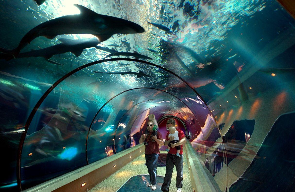 Los diez mejores acuarios de espa a for Mejores peces para acuario