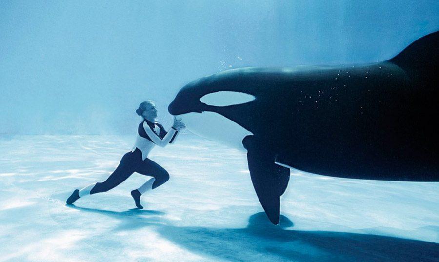 Características de las ballenas