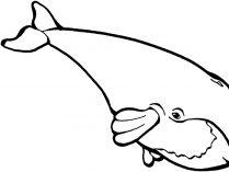 Galerías De Imágenes De Ballenas Wiki